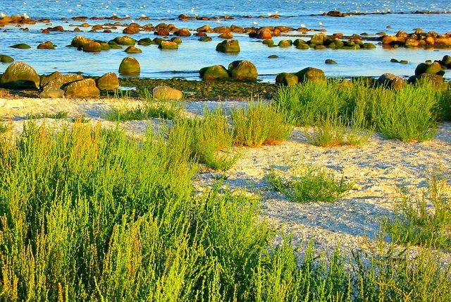Always close to the water in North Jutland. Strandby near Frederikshavn. (Photo by Mathias Liebing)