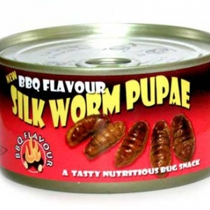 Canned Silkworm Pupae Most Disgusting Canned Foods Food & Drink picture