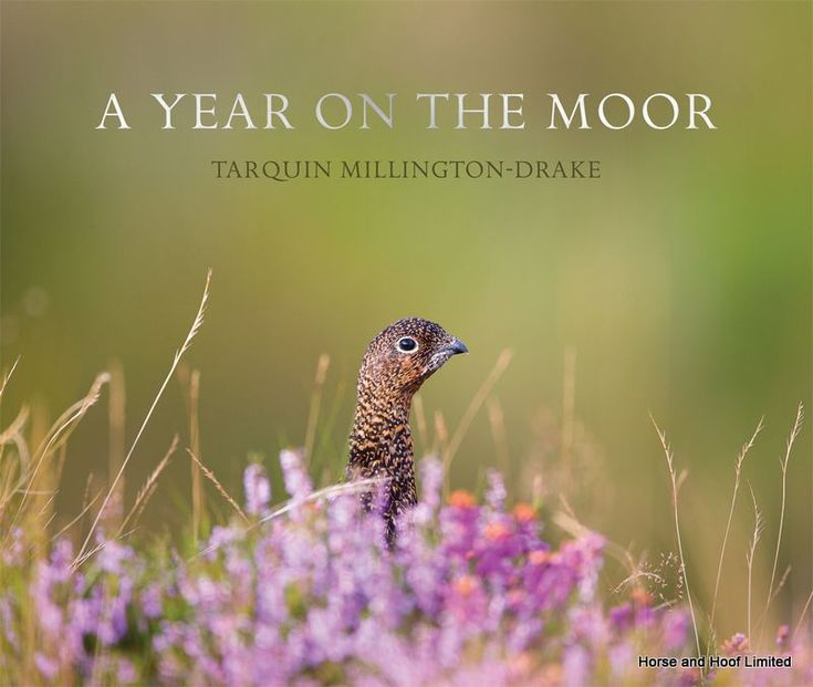 A Year On The Moor- Tarquin Millington- Drake A Year on the Moor is a unique photographic account of life on and around a grouse moor.