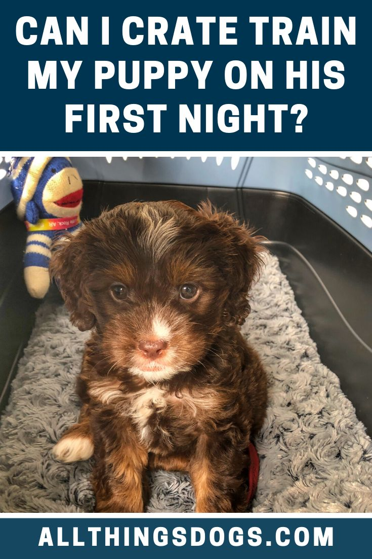 Can i crate train my puppy on his first night crate