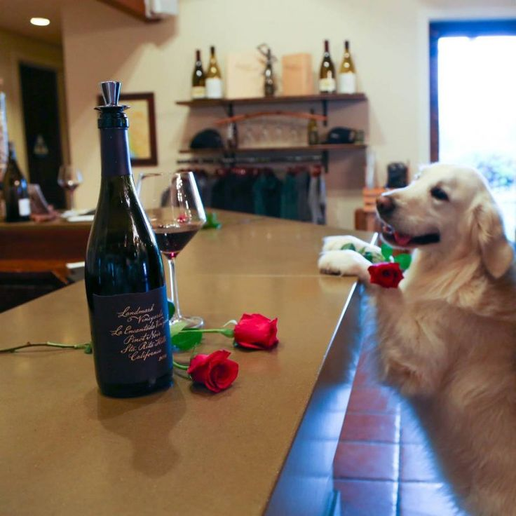 Landmark Vineyards, Kenwood Winery dog Tag, a rare breed of golden retriever, runs the show at Landmark's Kenwood tasting room. Dogs are welcome throughout the property, where they can wander with their owners into the vineyard, followed by a chardonnay and pinot noir tasting in the courtyard or tasting room for the dog-owners. Dogs get the luxury experience: Fiji water fresh from the bottle served in a bowl. Human tastings start at $30.
