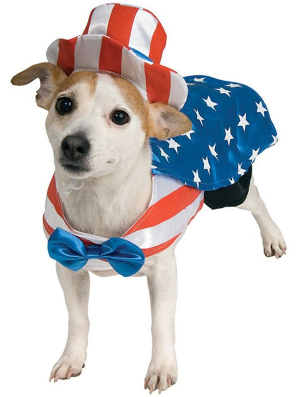 Check out Uncle Sam Dog Costume from Wholesale Halloween Costumes