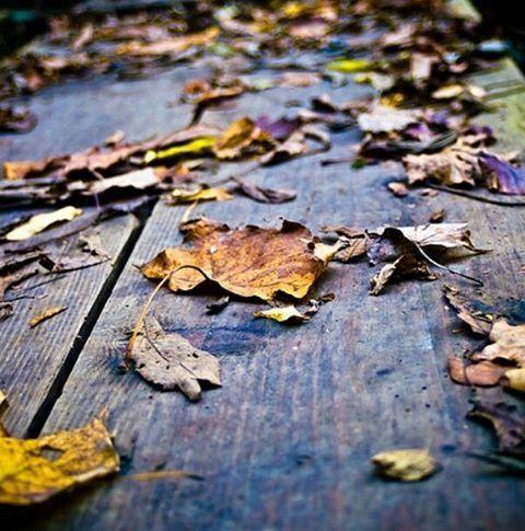 . Las hojas caídas de los arboles, reposan sobre los bancos del bosque cercano a casa. Solamente se están soltando las primeras atrevidas y valientes, con ganas de volar libremente y con la disponibilidad de soltarse de la rama que les ha dado alimento y cobijo durante todo el verano.  Saben cual es su destino, ponerse al antojo de las lluvias y el viento y pasar a formar parte, de nuevo de la tierra húmeda y alfombrada de otras hojas como ellas, que saben que son imprescindibles para la…