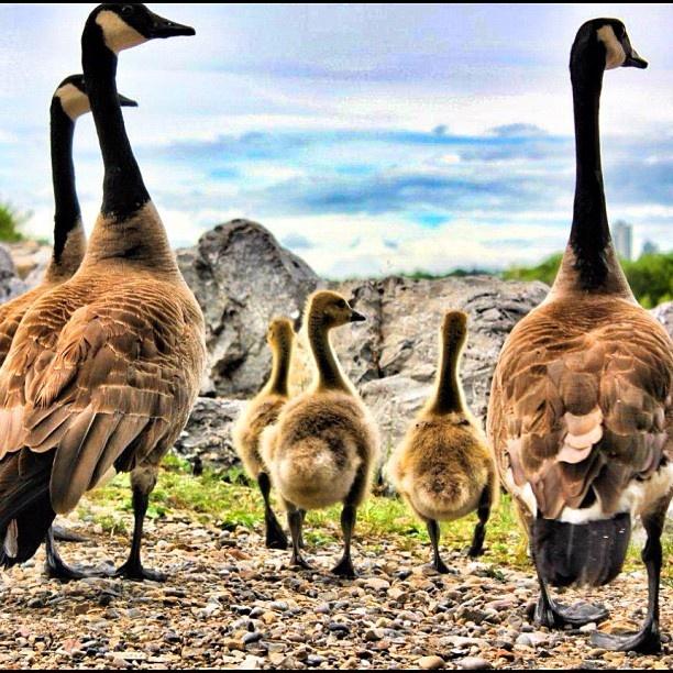 How Canadian! #summeryyc Photo by Neil Zeller