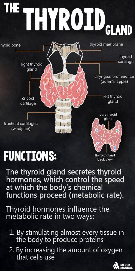 Knowledge Refresher: Hyperthyroidism represents an overactive thyroid gland and hypothyroidism is having an under-active thyroid. Click to learn more.