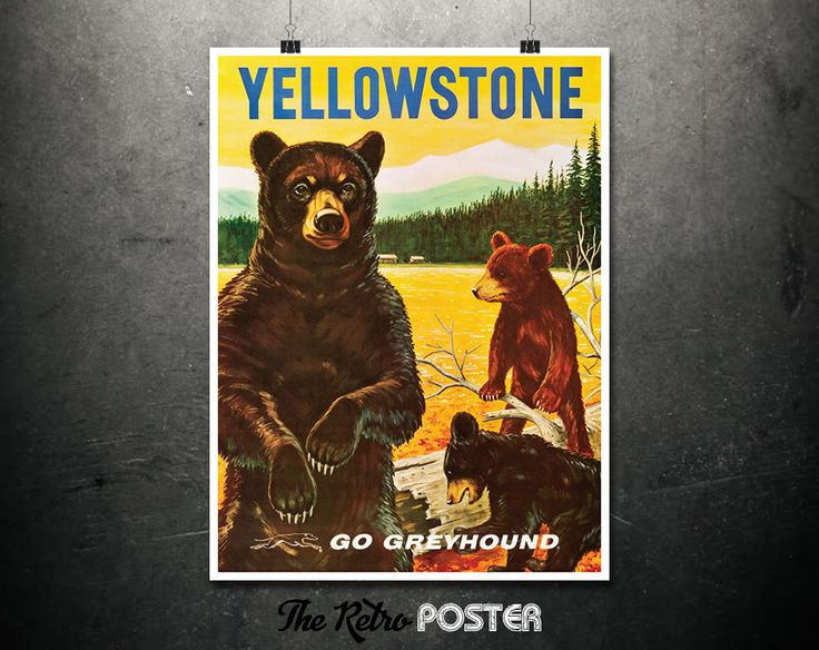 Yellowstone - Go Greyhound - 1960s, National Park Poster, Travel Poster Vintage, Travel Prints, Yellowstone Print, Grizzly and Black Bears by TheRetroPoster on Etsy