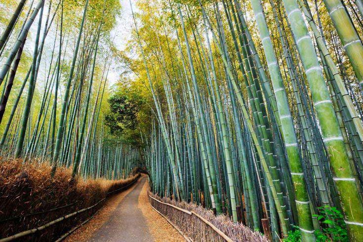 Bosque de bambú de Kioto, Japón - Bosques del mundo que parecen encantados