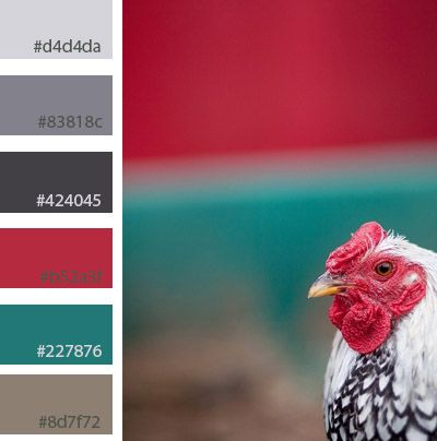 chicken bright colour palette - next time I paint my kitchen!