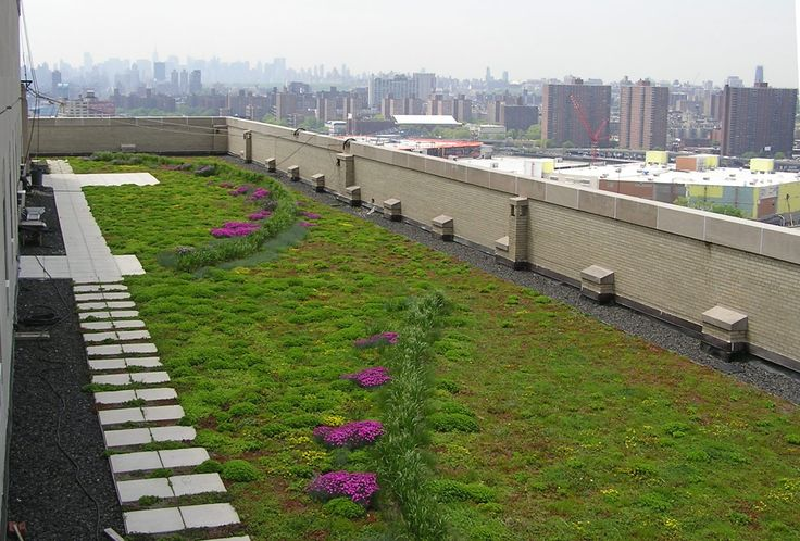 Bx_County_GreenRoof_Summer08_withskyline.JPG (1825×1235)