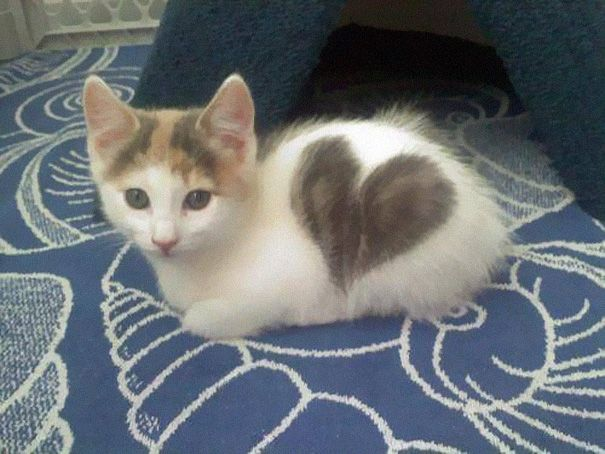"""Kitten with heart-shaped Markings"" --10 Cats That Got Famous For Their Awesome Fur Markings 