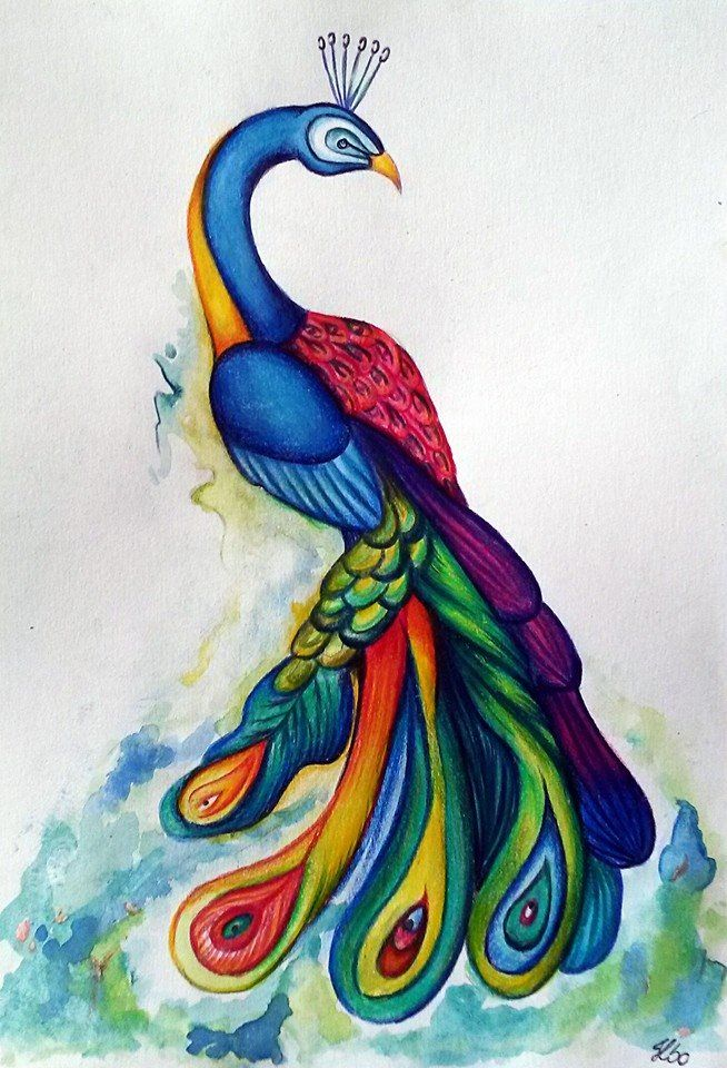 Peacock  made with color pencils and watercolors  #artsy