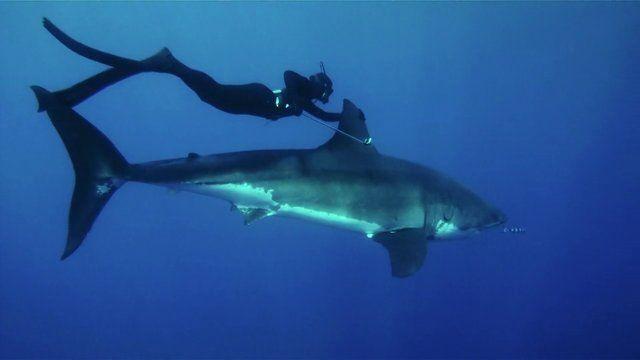 """Kimi Werner nimmt einen im Film """"Variables"""" mit auf Entdeckungsreise und erklärt ihr Verständnis vom Ökosystem – und lässt sich von einem weißen Hai ziehen."""