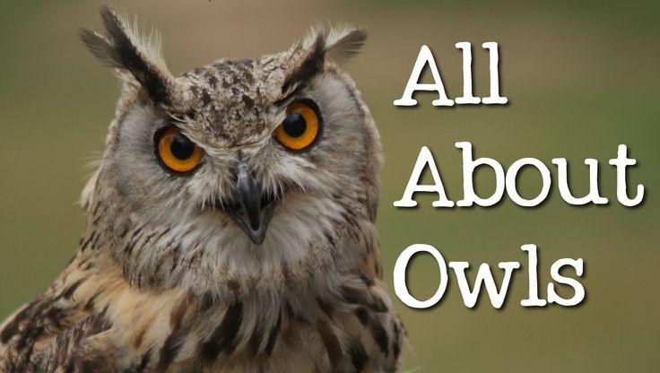 All About Owls: Backyard Bird Series - FreeSchool                                                                                                                                                                                 More