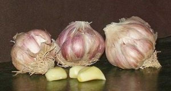 Many different studies have confirmed that allicin, the active compound found in garlic may use the same mechanism as blood pressure drugs called ACE inhibitors to lower blood pressure. It's believed that garlic prevents the creation of angiotensin II, a hormone, and helps relax blood vessels. And as we said, garlic is also extremely useful …