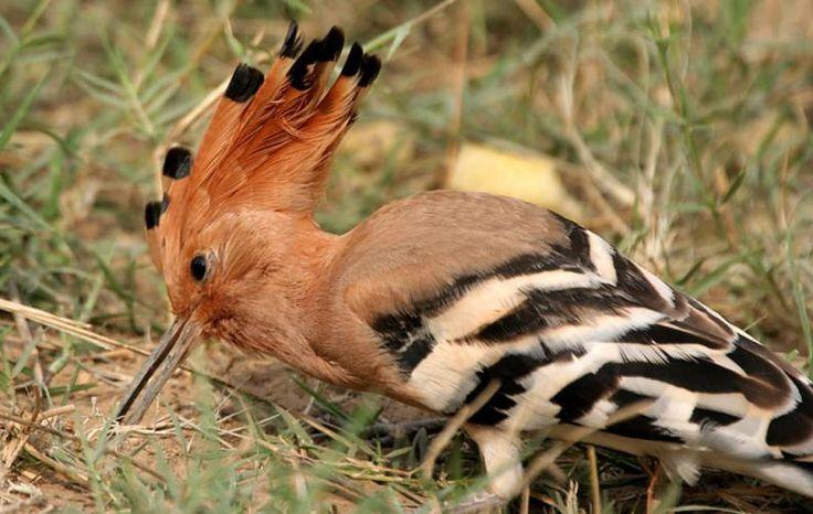 De entre todos los animales, las aves son las más variadas por su cantidad de especies, tamaños y colores. Incluso sus comportamientos son diferentes; algunas son más tranquilas y otras agresivas. Lo bueno es que esto nos permite descubrir todo el tiempo aves que no conocíamos en diferentes lugares. Veamos entonces