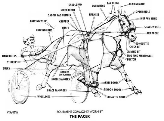 32 best harness racing images on pinterest