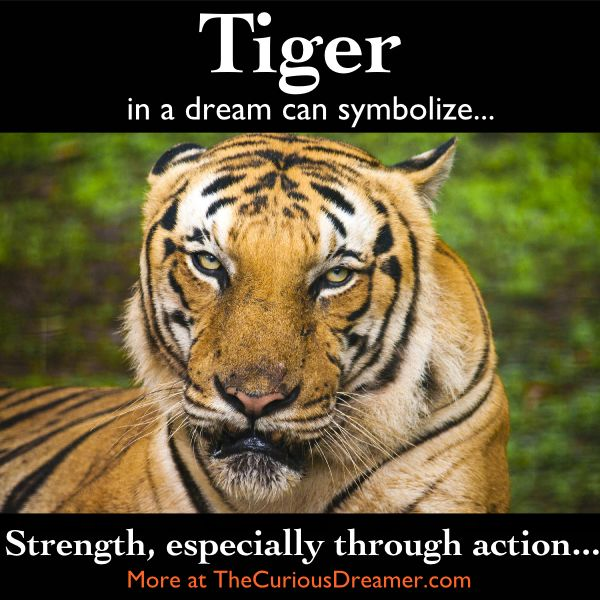 A tiger as a dream symbol can mean...  More at TheCuriousDreamer.  #DreamMeaning #DreamSymbol