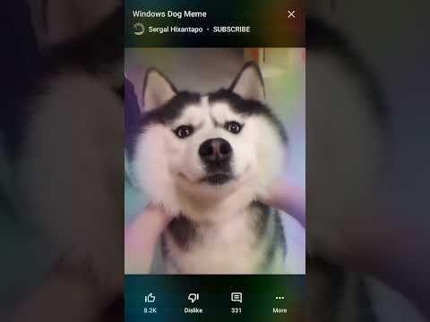 Windows Dog Meme Youtube Dog Memes Dogs Memes
