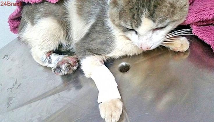 Maus-tratos: gatinho é resgatado com arame atado na patinha