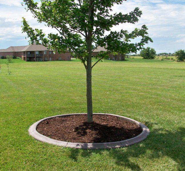 Flower Garden Ideas For Around Trees best 25+ landscape around trees ideas on pinterest | landscaping