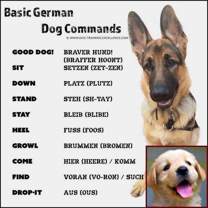 Aggressive Dog Behavior Towards Strangers And Dog Behavior
