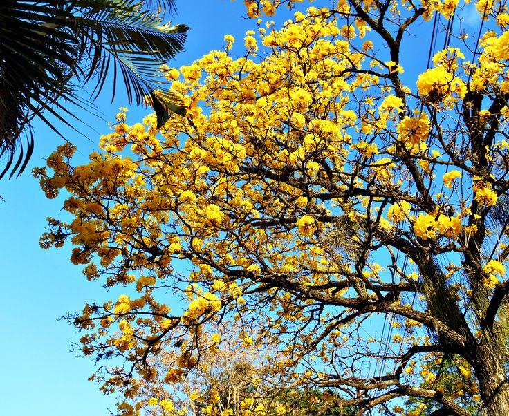Yellow yellow tree.