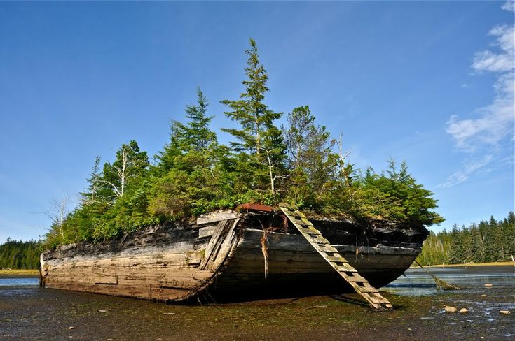 B.C. Photographer Of The Month: Guy Kimola, 2014. Haida Gwaii, Home of Haida First Nations - Grown Over!!