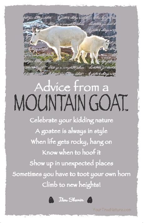 ☆ Advice From a Mountain Goat ~:By Ilan Shamir ☆