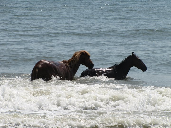 Corolla, NC.  This is another OBX beach famous for it's wild horses.