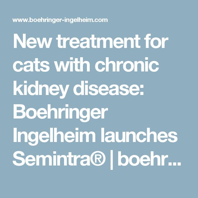 New treatment for cats with chronic kidney disease: Boehringer Ingelheim launches Semintra® | boehringer-ingelheim.com