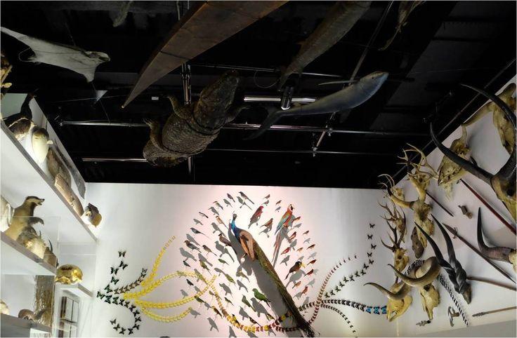 Expo La chambre des merveilles - Musée des Confluences à Lyon