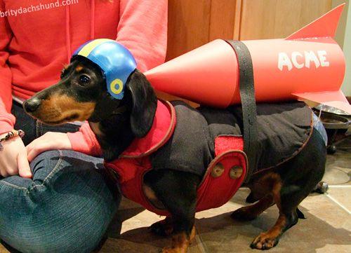 Wile. E. Coyote Wiener Dog Costume