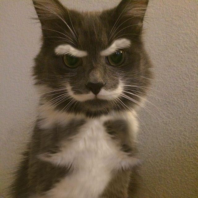 Brain Magazine - Page Pute - Ce chat n'approuve pas ce que vous avez fait ce week-end
