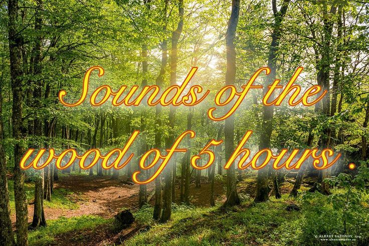 Sounds of the wood of 5 hours 1