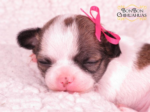 Teeny Tiny Henrietta at 2wks