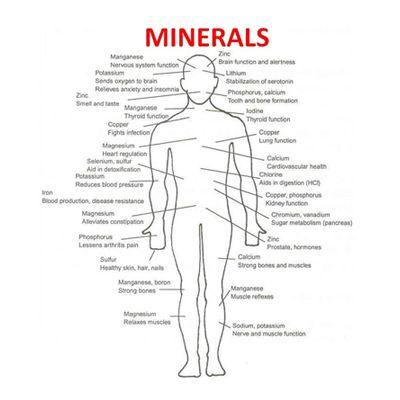 Balance is important to all areas of our lives and nutrition, but it is particularly crucial when it comes to minerals and trace minerals.  There are two types of minerals your body needs to stay healthy: major or macrominerals, and trace minerals. As their names suggest, these kinds of minerals are divided by need. Your body needs large amounts of major minerals and only very small amounts of trace minerals for normal function. Major minerals include calcium, magnesium, phosphorus…