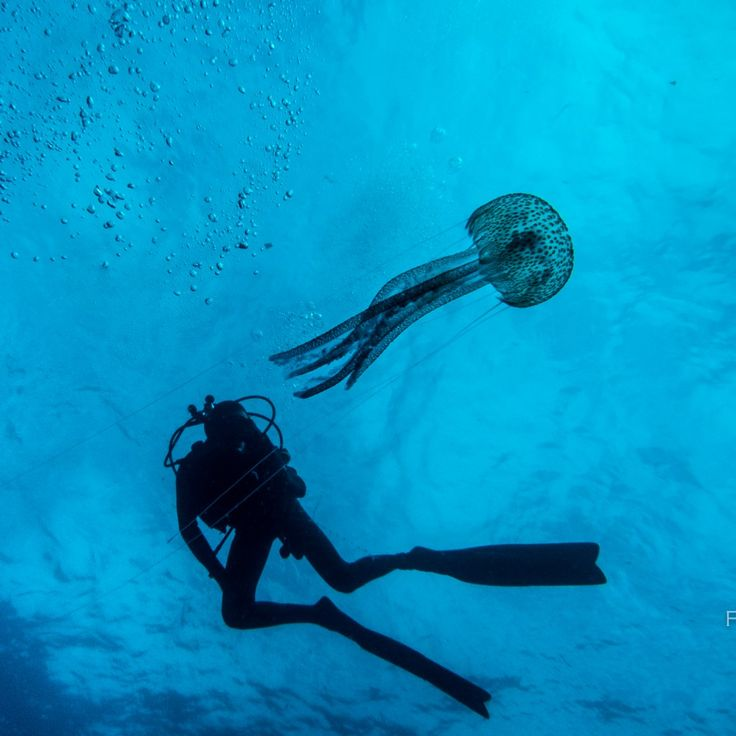 #WEPAjellyfish photo by Alin Miu in Azores