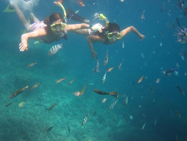 Cool Island, Karimunjawa the Vacation Destination