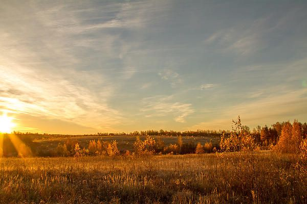 Morning view to autumn fields
