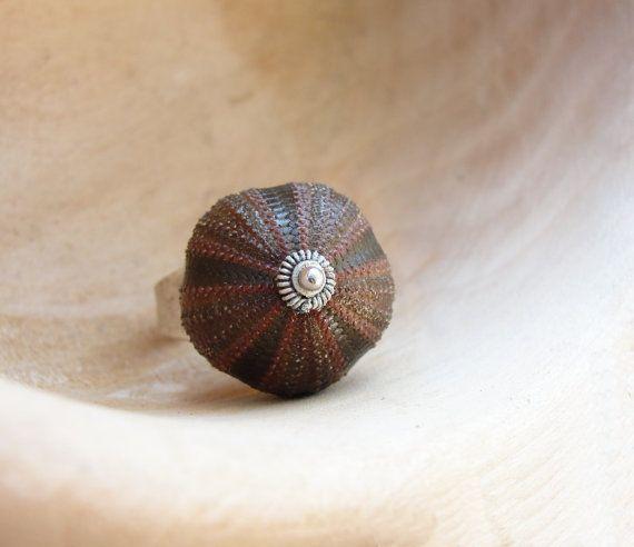 Sea Urchin Collection  Rare Brown Tuxedo Ring by StaroftheEast, $74.00