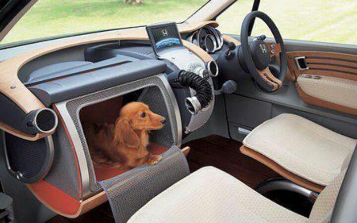 Doggie glove compartment