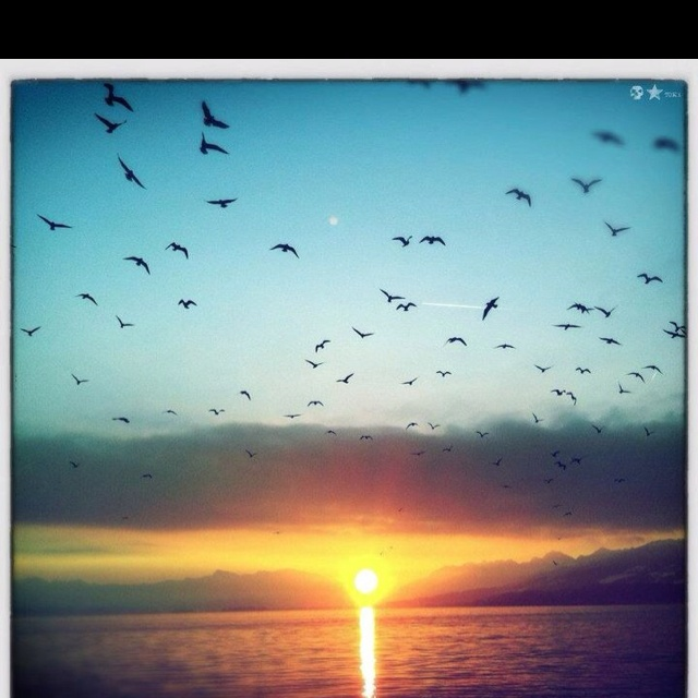 Beautiful sunset with birds motivational quotes pinterest