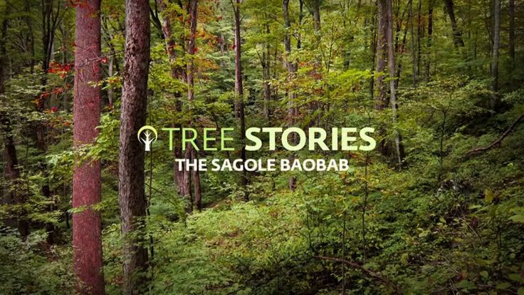 Tree Stories - The Sagole Baobab-1