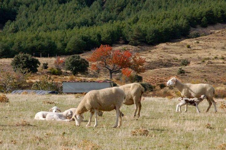 Ofertas de turismo rural