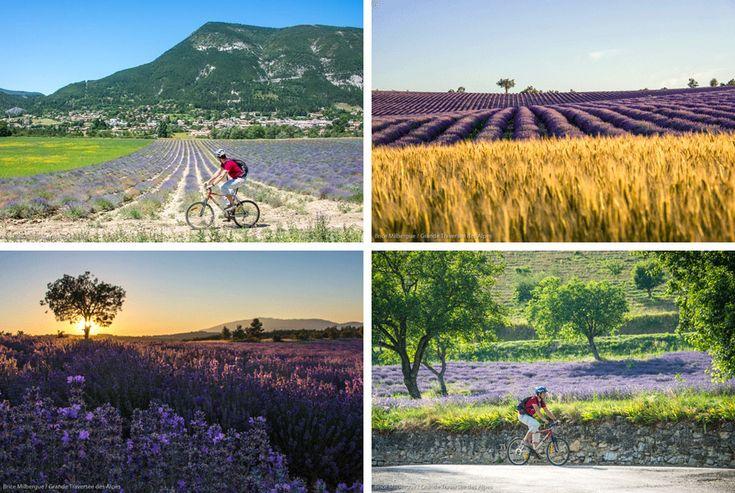 Fietsen in Frankrijk | Provence: mooie fietsroutes door de lavendel