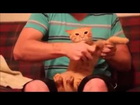 Vicces videó - YouTube