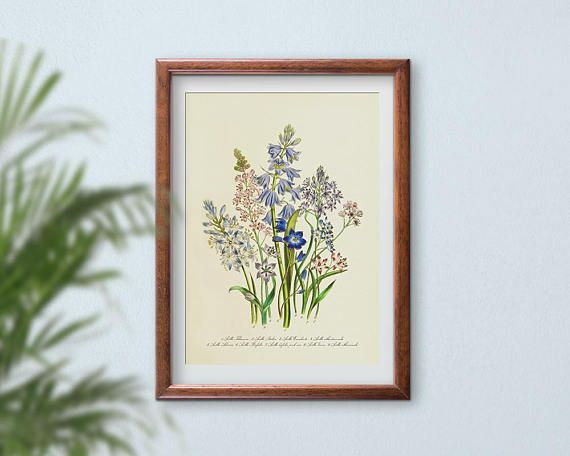 Vintage Botanical Prints, Floral Wall Art, Flower Prints, Large Print Poster Wall Art, Watercolor Painting, Scilla Squill Hyacinth Herbarium