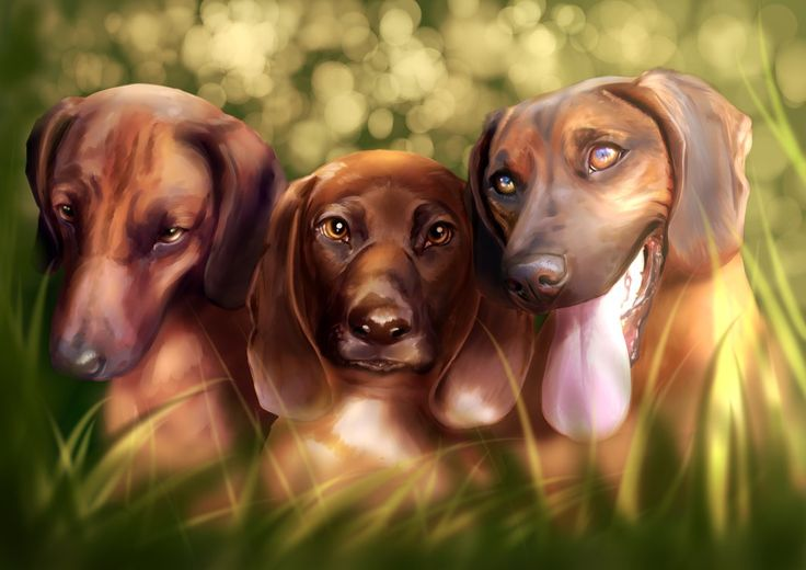 Commission #22 - Bavarian Mountain Hounds by Martith.deviantart.com on @DeviantArt