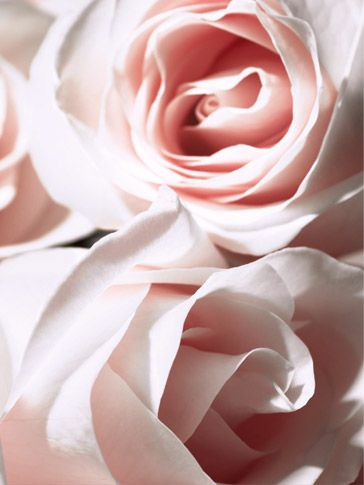 Parfum, maquillage, soins, cosmétiques, conseils et expertise beauté par Christian Dior