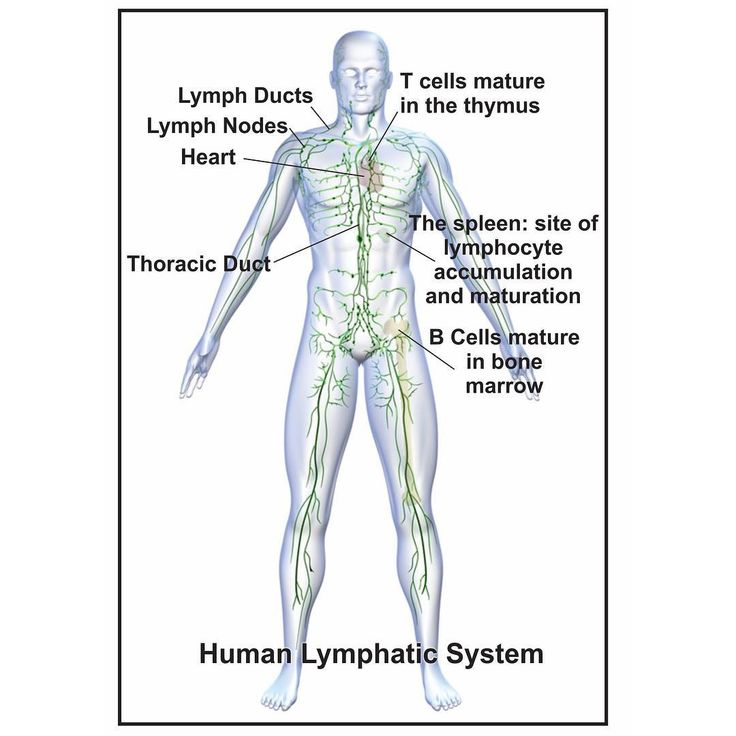 What does pressotherapy equipment do? It stimulates the lymphatic circulation. 👌🏻Here are the brief info: 🤓  Lymphatic circulation  The lymphatic system can be thought of as a drainage system needed because, as blood circulates through the body, blood plasma leaks into tissues through the thin walls of the capillaries. The portion of blood plasma that escapes is called interstitial or extracellular fluid, and it contains oxygen, glucose, amino acids, and other nutrients needed by tissue…